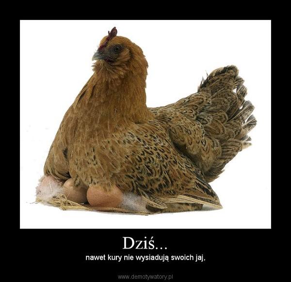 Dziś... – nawet kury nie wysiadują swoich jaj,