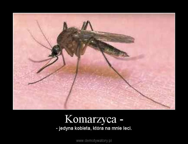 Komarzyca - – - jedyna kobieta, która na mnie leci.