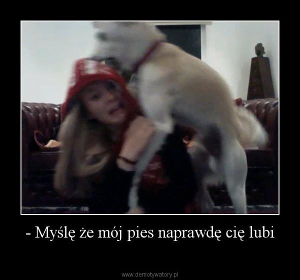 - Myślę że mój pies naprawdę cię lubi –