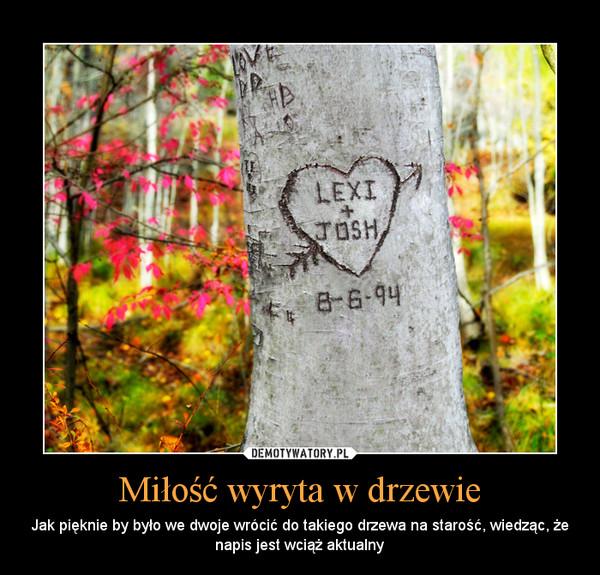 Miłość wyryta w drzewie – Jak pięknie by było we dwoje wrócić do takiego drzewa na starość, wiedząc, że napis jest wciąż aktualny