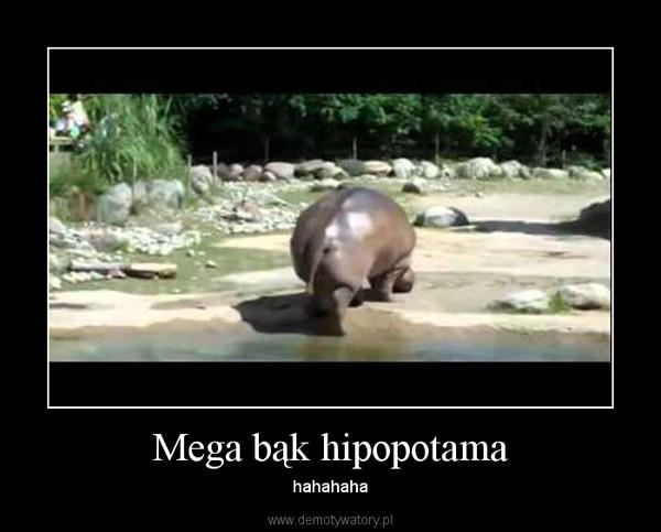 Mega bąk hipopotama – hahahaha