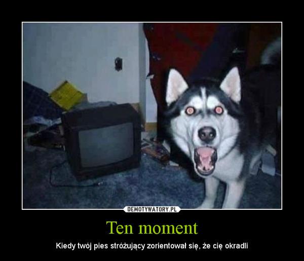 Ten moment – Kiedy twój pies stróżujący zorientował się, że cię okradli