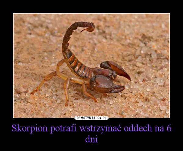 Skorpion potrafi wstrzymać oddech na 6 dni –