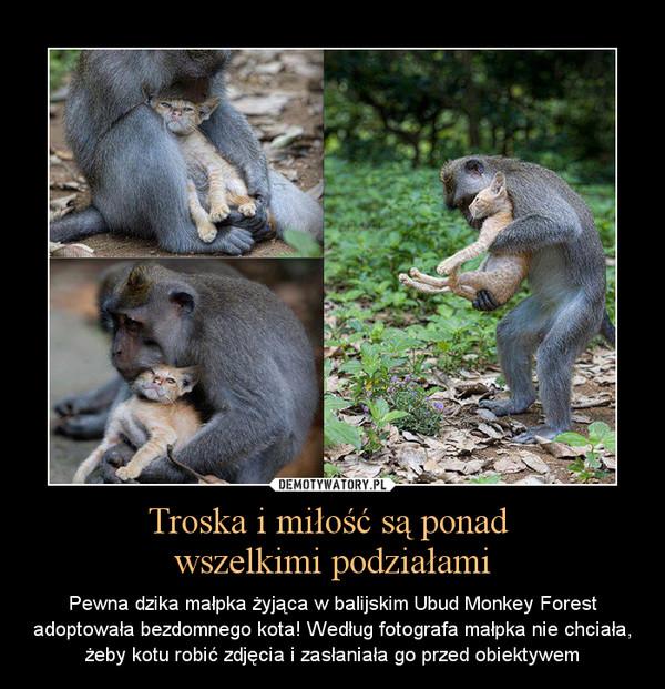 Troska i miłość są ponad wszelkimi podziałami – Pewna dzika małpka żyjąca w balijskim Ubud Monkey Forest adoptowała bezdomnego kota! Według fotografa małpka nie chciała, żeby kotu robić zdjęcia i zasłaniała go przed obiektywem