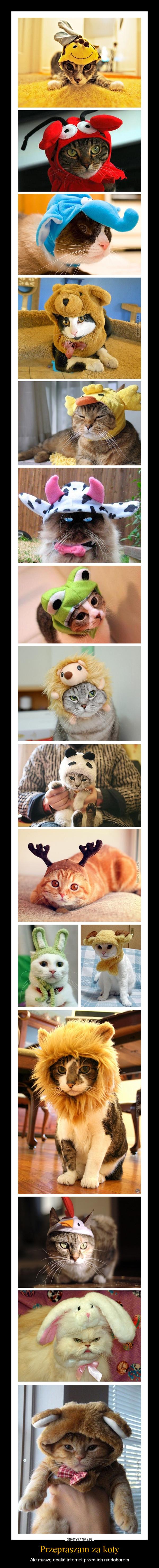 Przepraszam za koty – Ale muszę ocalić internet przed ich niedoborem