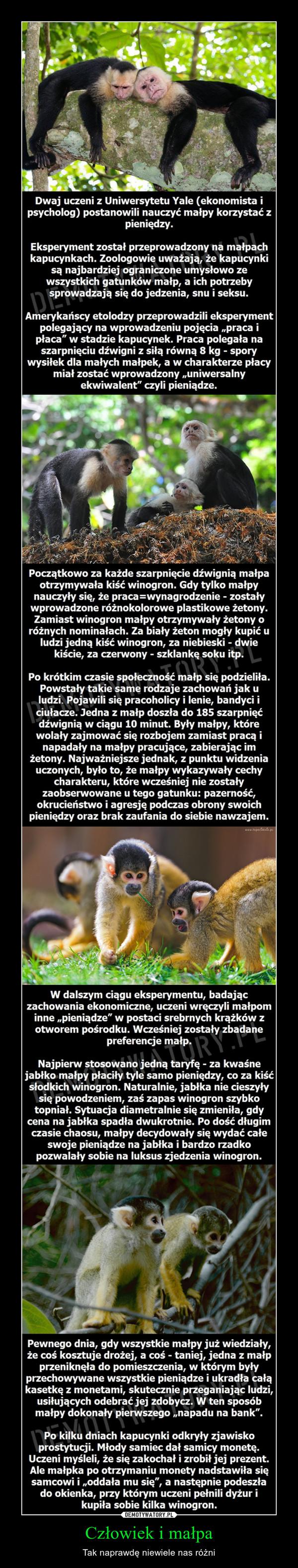 Człowiek i małpa – Tak naprawdę niewiele nas różni