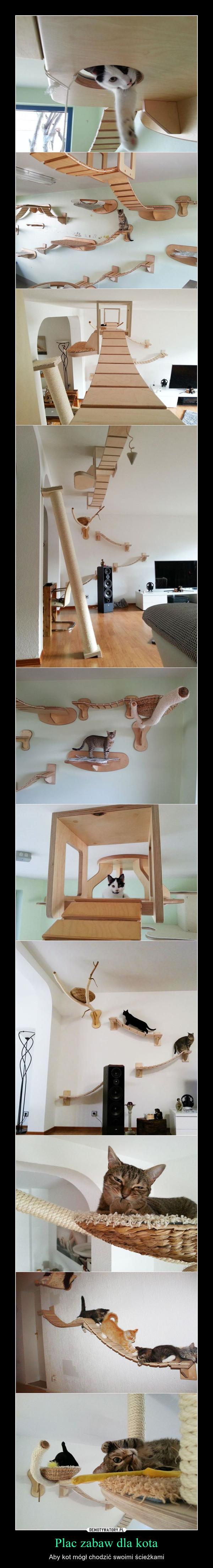 Plac zabaw dla kota – Aby kot mógł chodzić swoimi ścieżkami