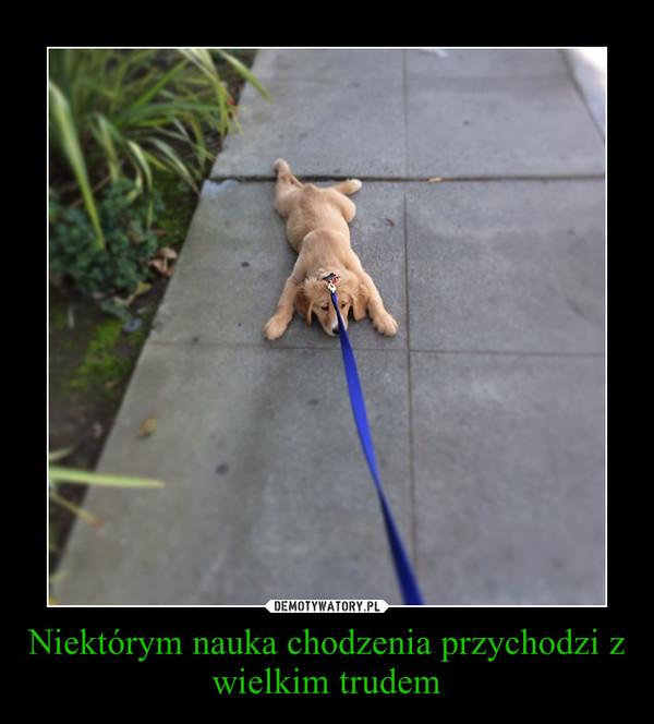 Niektórym nauka chodzenia przychodzi z wielkim trudem –