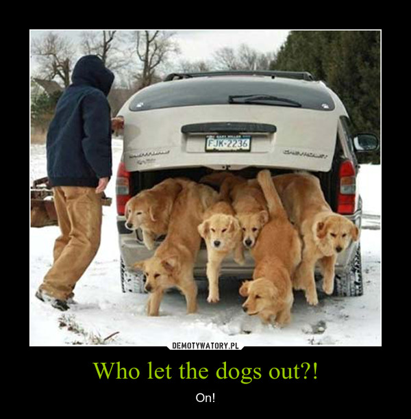 Who let the dogs out?! – On!