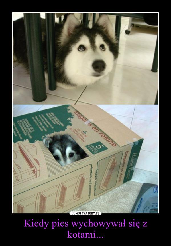 Kiedy pies wychowywał się z kotami... –