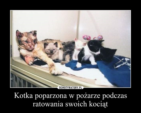Kotka poparzona w pożarze podczas ratowania swoich kociąt –