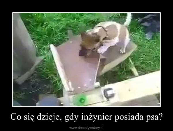 Co się dzieje, gdy inżynier posiada psa? –