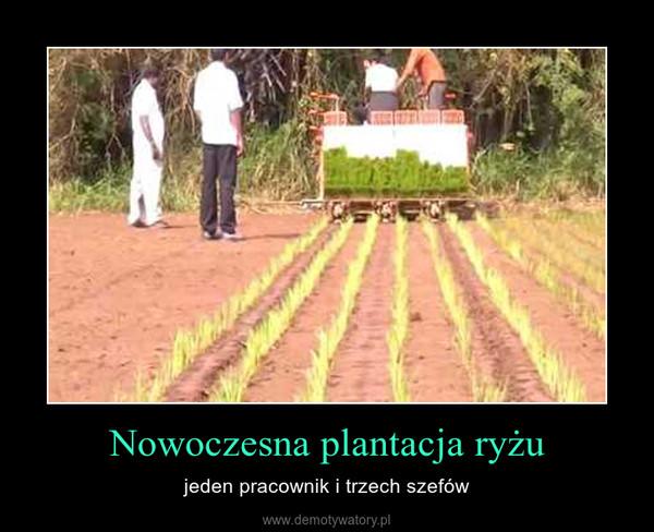 Nowoczesna plantacja ryżu – jeden pracownik i trzech szefów