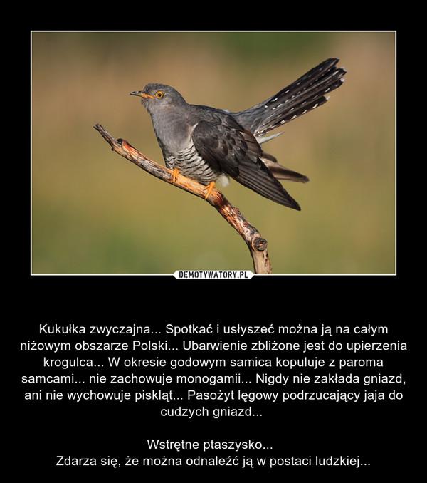 Kukułka pospolita... – Kukułka zwyczajna... Spotkać i usłyszeć można ją na całym niżowym obszarze Polski... Ubarwienie zbliżone jest do upierzenia krogulca... W okresie godowym samica kopuluje z paroma samcami... nie zachowuje monogamii... Nigdy nie zakłada gniazd, ani nie wychowuje piskląt... Pasożyt lęgowy podrzucający jaja do cudzych gniazd... \n\nWstrętne ptaszysko...  \nZdarza się, że można odnaleźć ją w postaci ludzkiej...