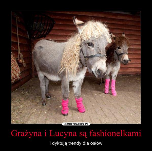 Grażyna i Lucyna są fashionelkami – I dyktują trendy dla osłów