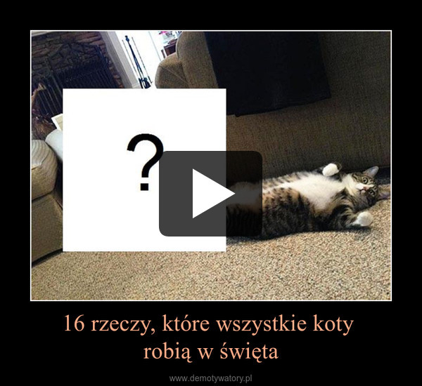 16 rzeczy, które wszystkie koty robią w święta –