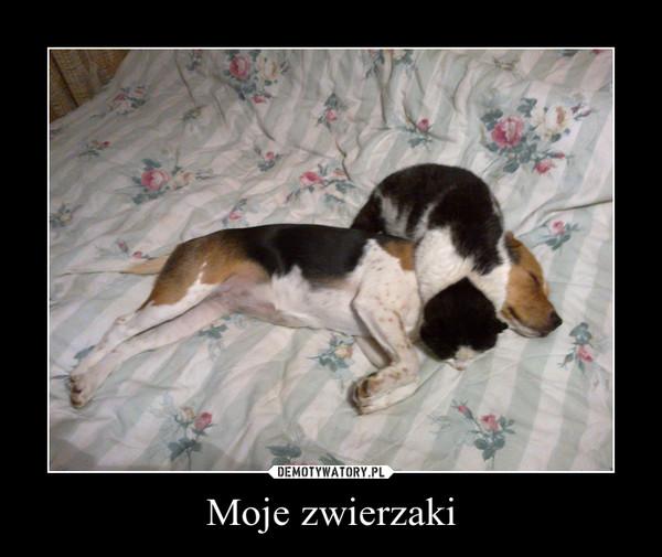 Moje zwierzaki –