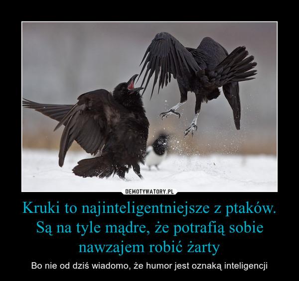 Kruki to najinteligentniejsze z ptaków. Są na tyle mądre, że potrafią sobie nawzajem robić żarty – Bo nie od dziś wiadomo, że humor jest oznaką inteligencji