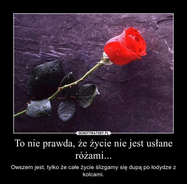 To nie prawda, że życie nie jest usłane różami... – Owszem jest, tylko że całe życie ślizgamy się dupą po łodydze z kolcami.