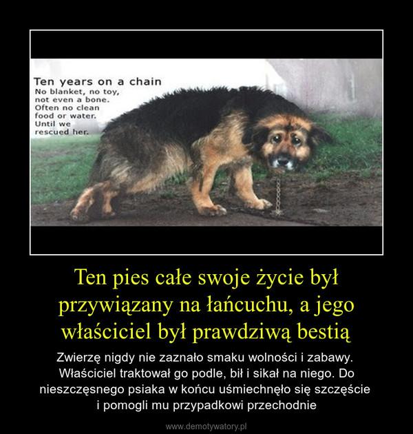 Ten pies całe swoje życie był przywiązany na łańcuchu, a jego właściciel był prawdziwą bestią – Zwierzę nigdy nie zaznało smaku wolności i zabawy. Właściciel traktował go podle, bił i sikał na niego. Do nieszczęsnego psiaka w końcu uśmiechnęło się szczęście i pomogli mu przypadkowi przechodnie