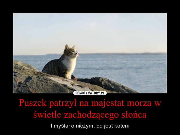Puszek patrzył na majestat morza w świetle zachodzącego słońca – I myślał o niczym, bo jest kotem