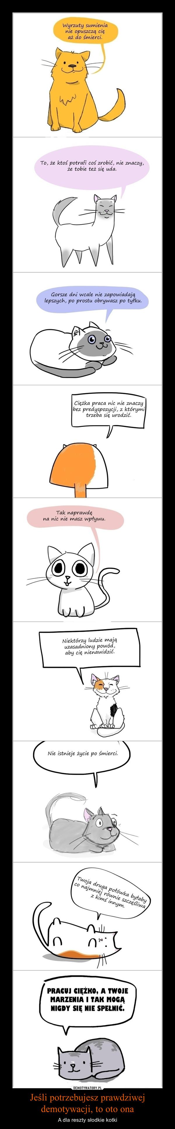 Jeśli potrzebujesz prawdziwej demotywacji, to oto ona – A dla reszty słodkie kotki