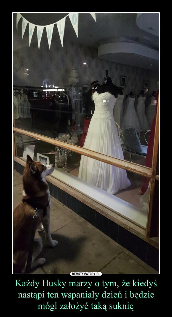 Każdy Husky marzy o tym, że kiedyś nastąpi ten wspaniały dzień i będzie mógł założyć taką suknię –