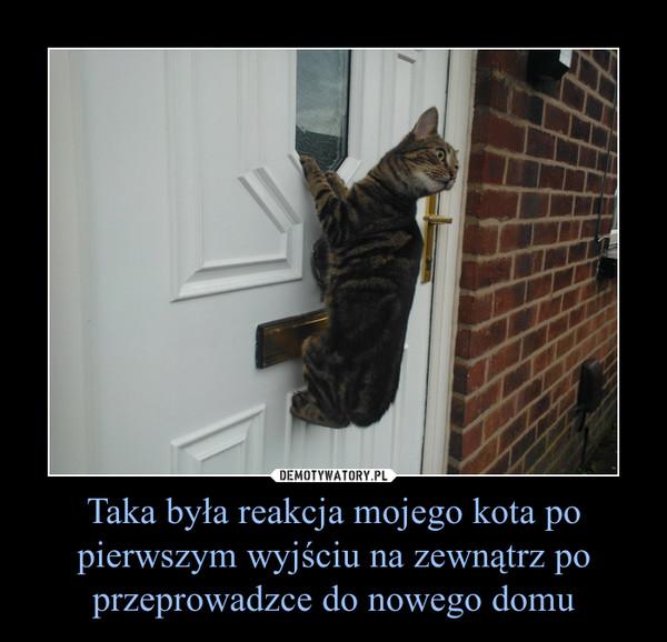 Taka była reakcja mojego kota po pierwszym wyjściu na zewnątrz po przeprowadzce do nowego domu –