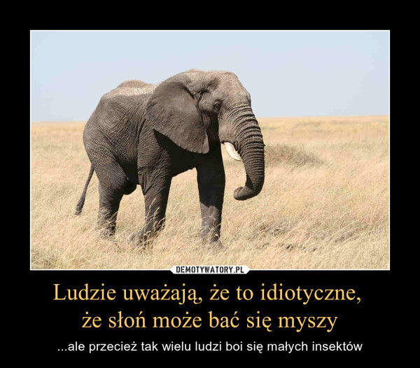 Ludzie uważają, że to idiotyczne, że słoń może bać się myszy – ...ale przecież tak wielu ludzi boi się małych insektów