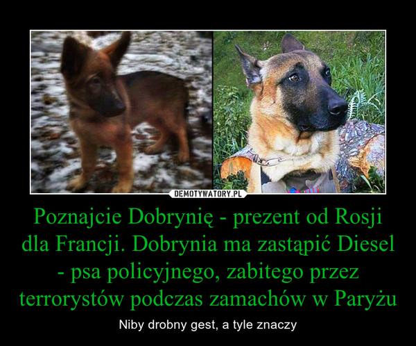 Poznajcie Dobrynię - prezent od Rosji dla Francji. Dobrynia ma zastąpić Diesel - psa policyjnego, zabitego przez terrorystów podczas zamachów w Paryżu – Niby drobny gest, a tyle znaczy