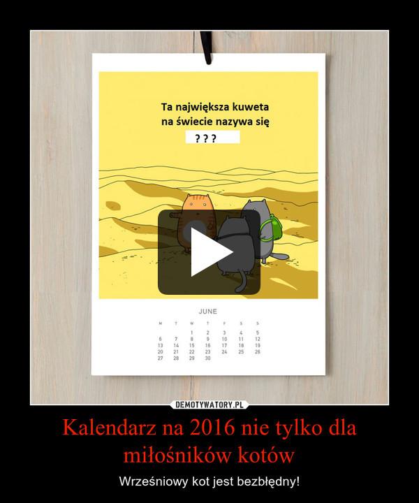 Kalendarz na 2016 nie tylko dla miłośników kotów – Wrześniowy kot jest bezbłędny!