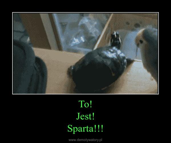 To!Jest!Sparta!!! –