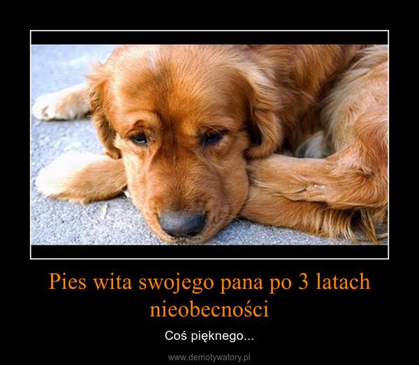 Pies wita swojego pana po 3 latach nieobecności – Coś pięknego...