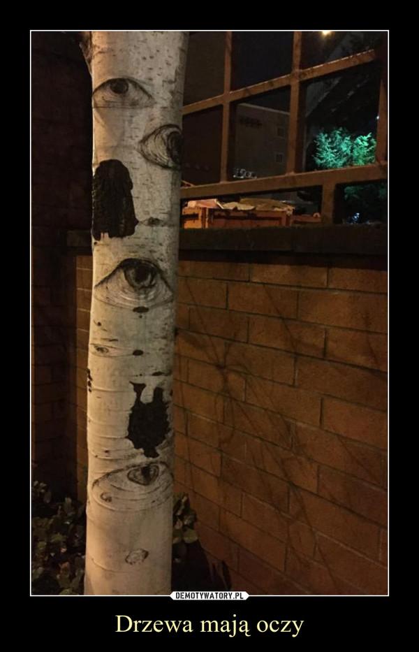 Drzewa mają oczy –