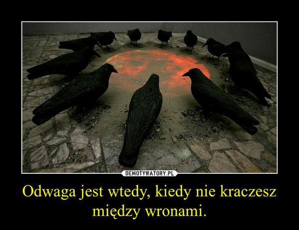 Odwaga jest wtedy, kiedy nie kraczesz między wronami. –