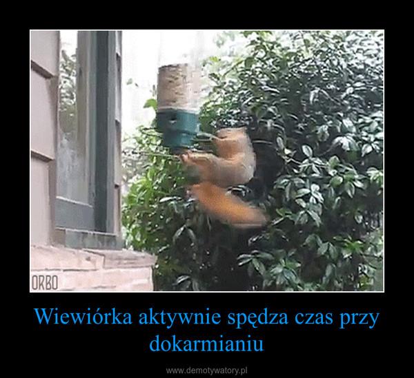 Wiewiórka aktywnie spędza czas przy dokarmianiu –