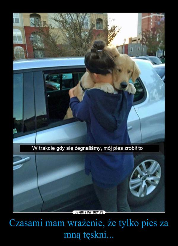 Czasami mam wrażenie, że tylko pies za mną tęskni... –