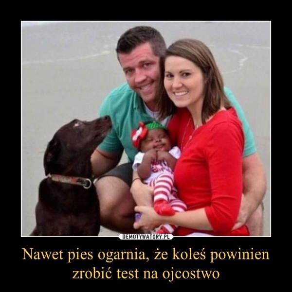 Nawet pies ogarnia, że koleś powinienzrobić test na ojcostwo –