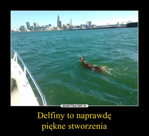 Delfiny to naprawdępiękne stworzenia –