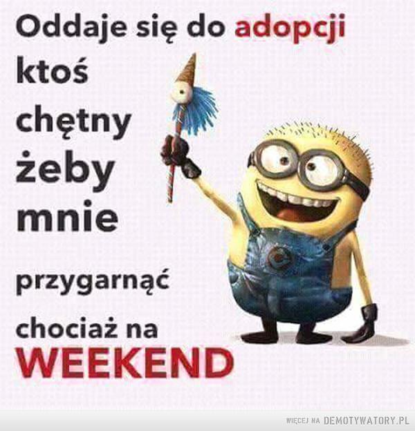 Ktoś mnie przygarnie na weekend? –  Oddaje się do adopcji. Ktoś chętny żeby mnie przygarnąć chociaż na weekend?