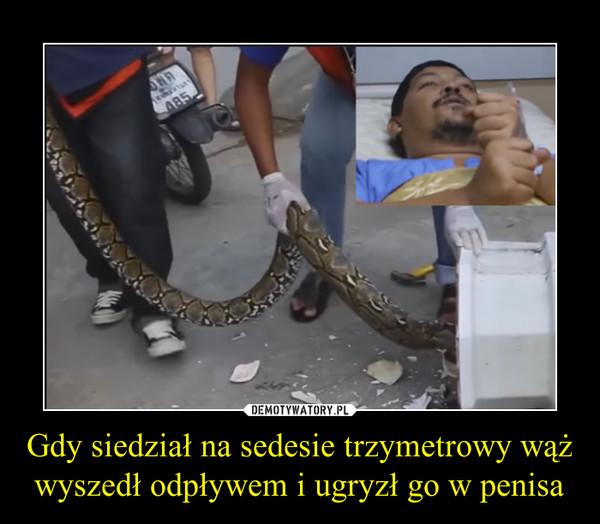 wąż na penisie)