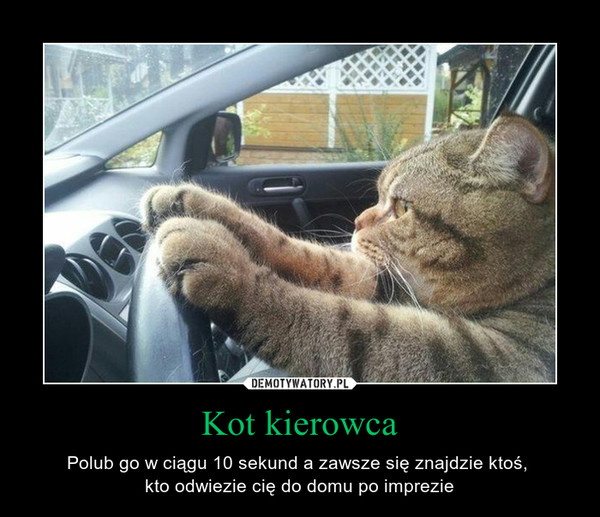 Kot kierowca – Polub go w ciągu 10 sekund a zawsze się znajdzie ktoś, kto odwiezie cię do domu po imprezie