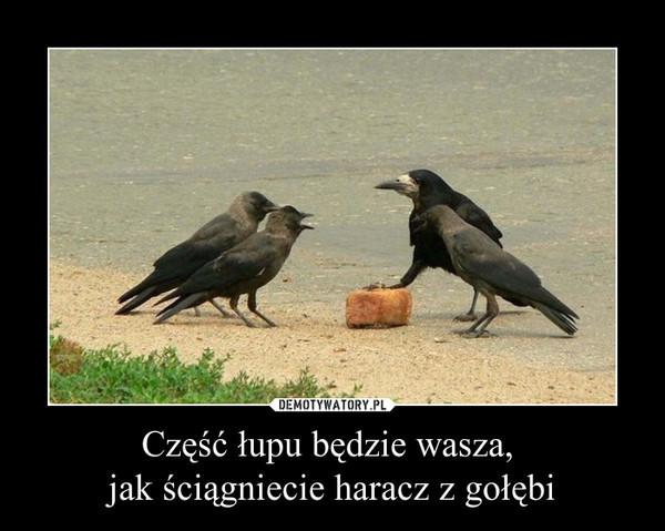 Część łupu będzie wasza, jak ściągniecie haracz z gołębi –