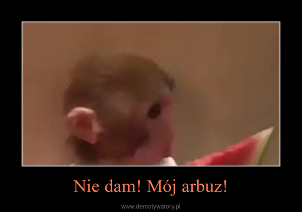 Nie dam! Mój arbuz! –