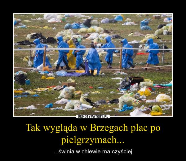 Tak wygląda w Brzegach plac po pielgrzymach... – ...świnia w chlewie ma czyściej
