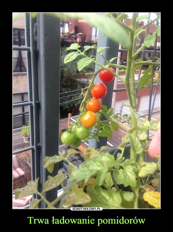Trwa ładowanie pomidorów –