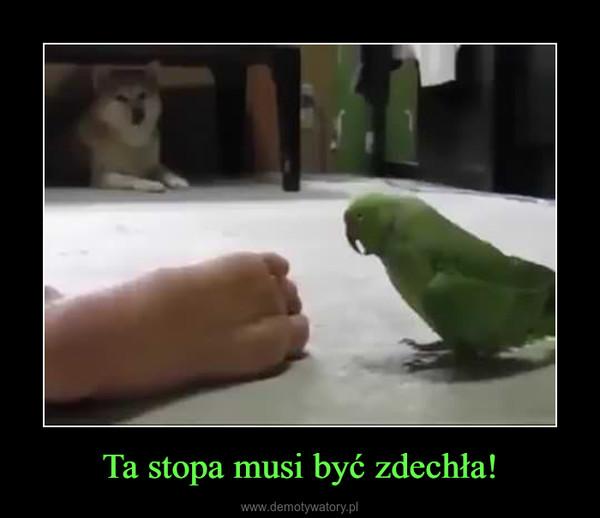 Ta stopa musi być zdechła! –