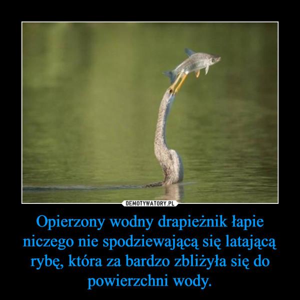 Opierzony wodny drapieżnik łapie niczego nie spodziewającą się latającą rybę, która za bardzo zbliżyła się do powierzchni wody. –