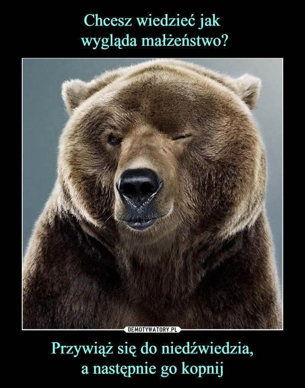 Przywiąż się do niedźwiedzia,a następnie go kopnij –