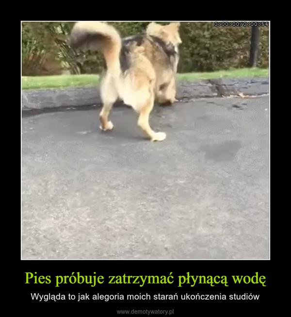 Pies próbuje zatrzymać płynącą wodę – Wygląda to jak alegoria moich starań ukończenia studiów